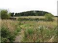 TG0441 : Oulton Hill near Glanford by Pauline E