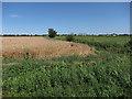 TL5487 : Wheat field by Hugh Venables