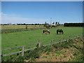 TL5486 : Horses by Black Bank Road by Hugh Venables