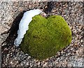 NJ0003 : Moss and snow on granite by Walter Baxter