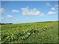 TF9731 : Fields east of Kettlestone by Evelyn Simak