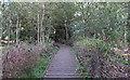 TL4803 : Raised walkway by Roger Jones