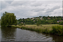 SU9948 : River Wey south of Guildford by Ian Capper
