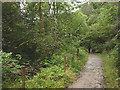 NO0240 : Woodland footpath by the Inchewan Burn by Karl and Ali