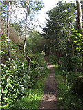 NF7828 : Path through the trees by Hugh Venables