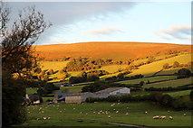 SO1252 : Evening Light, Cregrina, Powys by Christine Matthews