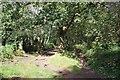 SJ4975 : Footpath to Helsby Hill by Jeff Buck