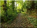 NS4473 : Former driveway to Auchentorlie House by Lairich Rig