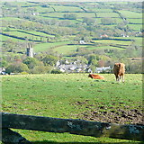 SX7177 : Above Widecombe by Graham Horn