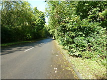 SU8016 : B2141 north to South Harting by Dave Spicer