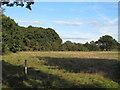 TL4101 : Hay meadow near Brookmeadow Wood by Roger Jones