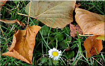 J3875 : Autumn leaves, Belmont Park, Belfast by Albert Bridge