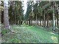 SU8416 : Forestry track in Linchball Wood by Dave Spicer