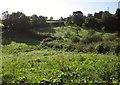 SX8766 : Fields at North Whilborough by Derek Harper