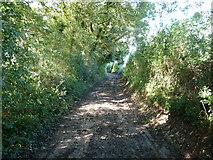 SU8315 : Footpath 485 to Monkton Farm by Dave Spicer