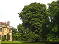TQ4273 : A fine Horse Chestnut tree in the grounds of Eltham Palace by Rod Allday