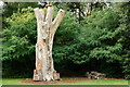 TQ2476 : The Bishop's Tree, Fulham Palace, London by Peter Trimming
