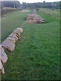 NZ1366 : Hadrian's Wall at Heddon-on-the-Wall by Darrin Antrobus
