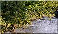 J1785 : The Sixmilewater, Muckamore (3) by Albert Bridge