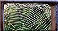 J1785 : Spiders' webs, Muckamore by Albert Bridge
