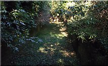 TQ7668 : Defensive Ditch towards Brompton by David Anstiss