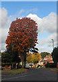 SP0281 : Leafy suburb by Row17