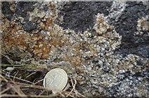 SK2855 : Fluorite Vug by Ashley Dace