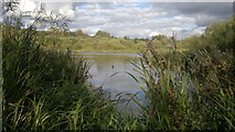 SJ7993 : Broad Ees Dole Nature Reserve by Steven Haslington