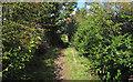 TQ7996 : Footpath along Fenn Creek by Roger Jones
