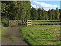 SU9262 : Windlesham arboretum by Alan Hunt