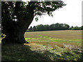 TM1898 : View across stubble by Flordon Hall by Evelyn Simak