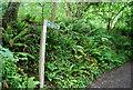 SX8652 : Lapthorne Lane by N Chadwick