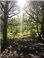 TQ2272 : Sunlight and trees, Wimbledon Common by Derek Harper