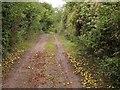 SU5151 : Apples on the Harrow Way by Derek Harper