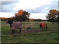 TQ3449 : Horses at Whytegate Farm by Stephen Craven
