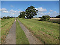 TL5463 : Forty Acre Droveway by Hugh Venables