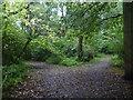 TQ3964 : Diverging paths in Well Wood by Marathon