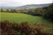 ST4397 : Field near Great Wood by Philip Halling