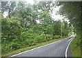 NM7861 : Tunnel of broadleaf trees by C Michael Hogan