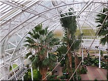 NS6064 : Inside the Winter Gardens, People's Palace Glasgow by Jim Barton