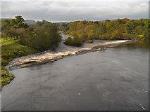 NY9170 : Chollerford Weir by David Dixon