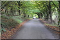 ST4296 : Country road near Pen-y-Cae-Mawr by Philip Halling