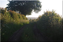 TG1408 : Footpath to Bawburgh by N Chadwick