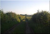 TG1508 : Footpath heading north by N Chadwick