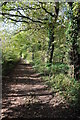 ST4393 : Woodland track, Wentwood by Philip Halling