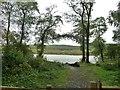 NX9068 : Loch Arthur looking north by Ann Cook