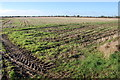 TR0332 : Farmland on Romney Marsh by Julian P Guffogg