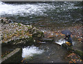 SD5086 : Photographing the fish ladder by Karl and Ali