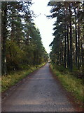 NH9317 : Road through the woodland by Andrew Abbott