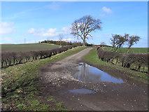 NU0122 : Byroad and farmland, Ilderton by Andrew Smith
